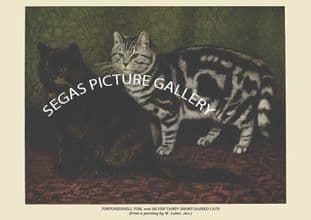 TORTOISESHELL TOM, and SILVER TABBY SHORT-HAIRED CATS (From a painting by W. Luker, Jun.)