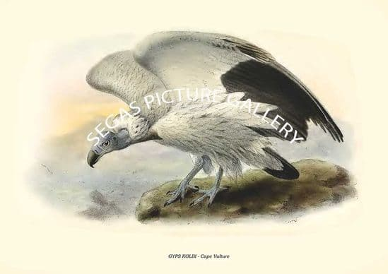 Volume 01 Acipters of Diurnal Birds of Prey by Richard Bowdler Sharpe (1874)