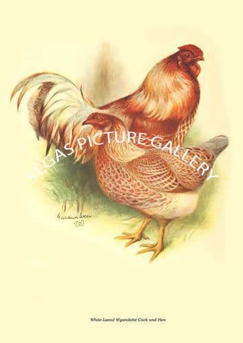 White-Laced Wyandotte Cock and Hen