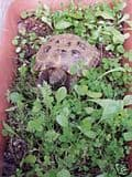 100 bags 1000 seeds Luxury Tortoise Seed Mix with personalised label - FREE RECORDED POST