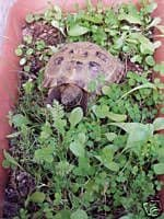 50 bags 1000 seeds Luxury Tortoise Seed Mix with personalised label - FREE RECORDED POST