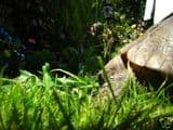 Fibre/ Lawn Seed Mix Rabbits 1KG , Tortoises. Grasses, Clovers and Plantain - FREE POST