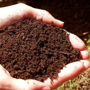 Seed Growing Soil with added Calcium 2KG - FREE POST